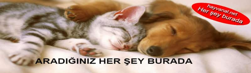 köpek&kedi