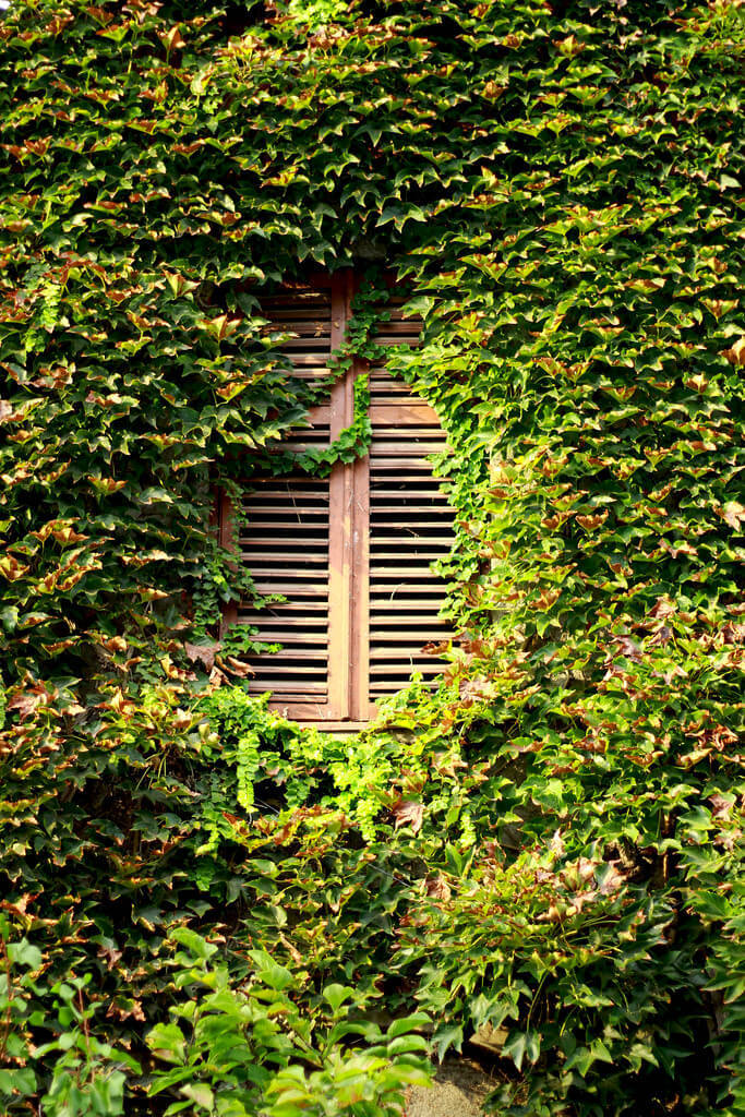 Green-Window-1_uspmie