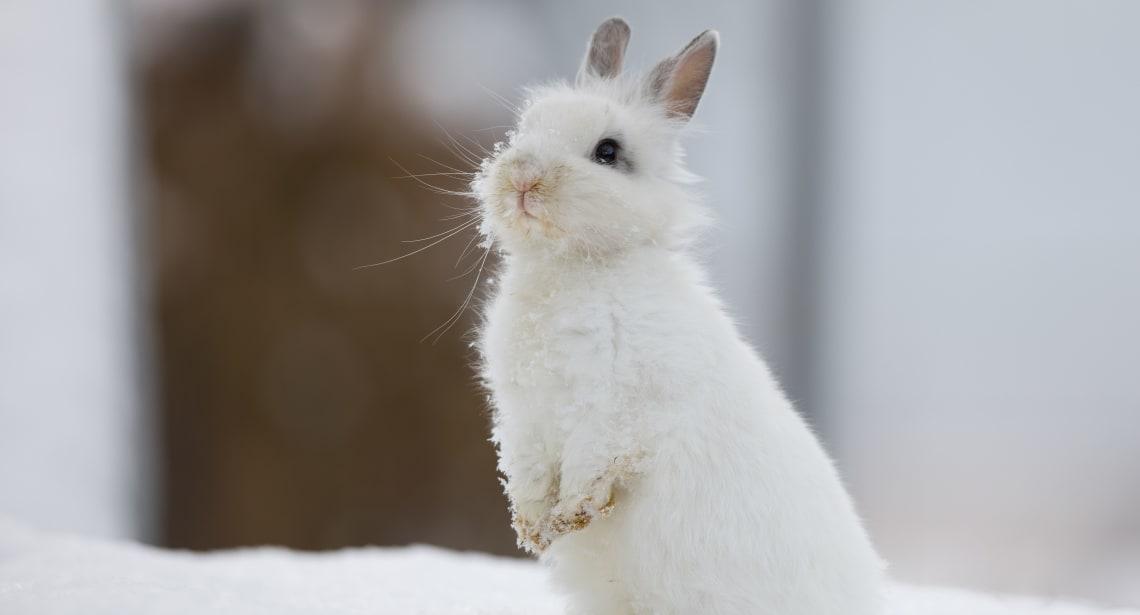 Kan kaniner fryse? - Av VESO Apotek