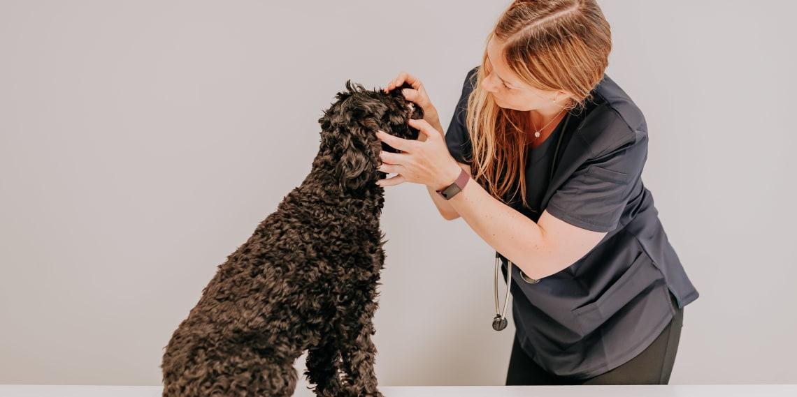 Seks sikre tegn på at hunden din har vondt i munnen!