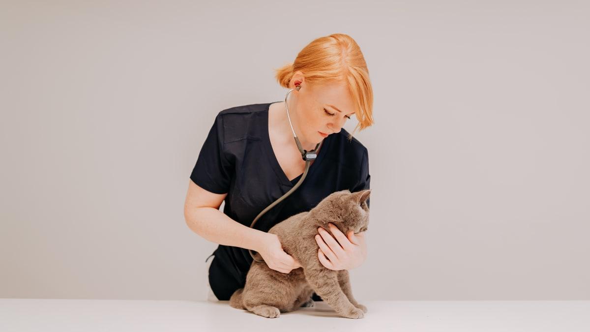 Seks sikre tegn på at katten din har vondt i munnen!