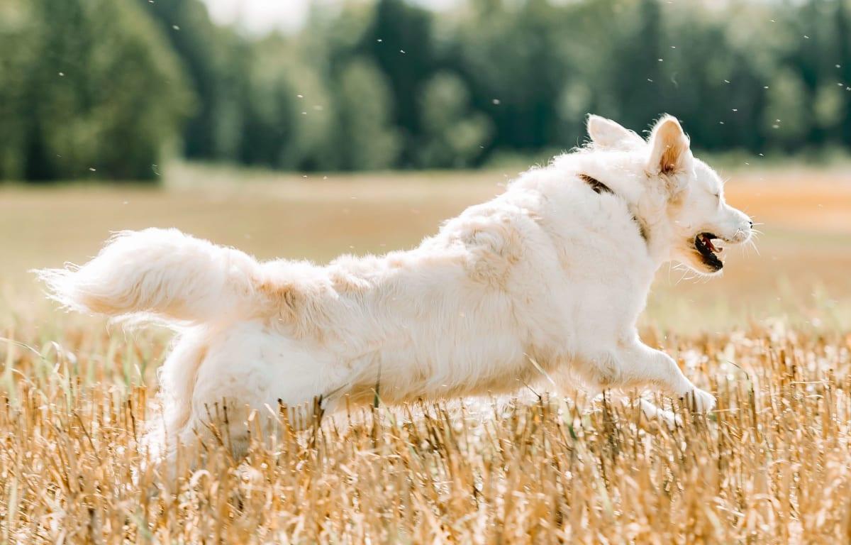 Fiskeolje - Omega 3 til hund og katt? Ja, takk! Sier veterinærene i VESO!