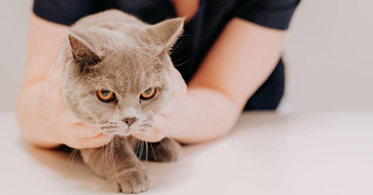 Hvordan ser du om katten din har vondt? Her er seks ting å følge med på!