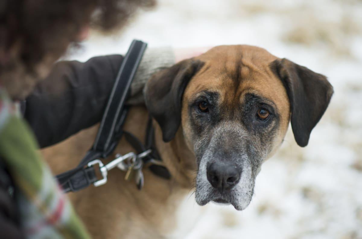 Stiv og støl?  - 5 tegn på at hunden har smerter – Av VESO Apotek