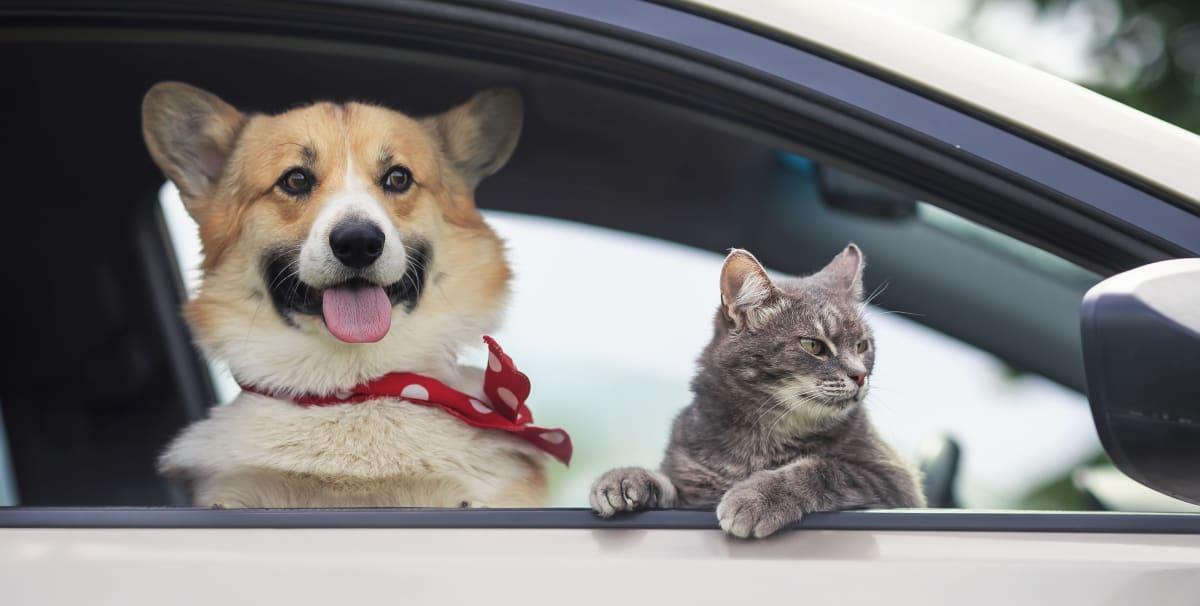 Unngå stresset hund og katt – Hete tips for en vellykket bilferie! | Av VESO Apotek