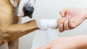Førstehjelp hos hund; Sår, kutt og blødninger