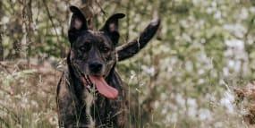 Flåttbitt kan gi alvorlig sykdom - pass på hunden din i sommer!   Av VESO Apotek