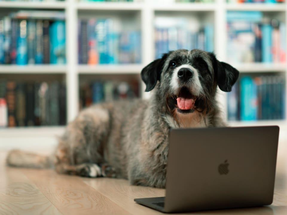 Lyst til å lære mer om hundehelse?