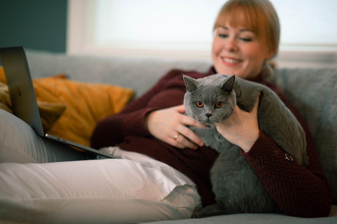 Lære mer om katten din?