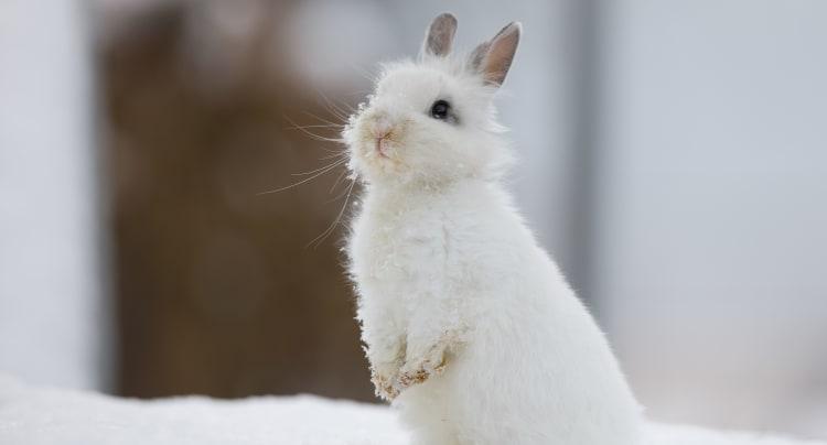 Hvordan passe kaniner om vinteren