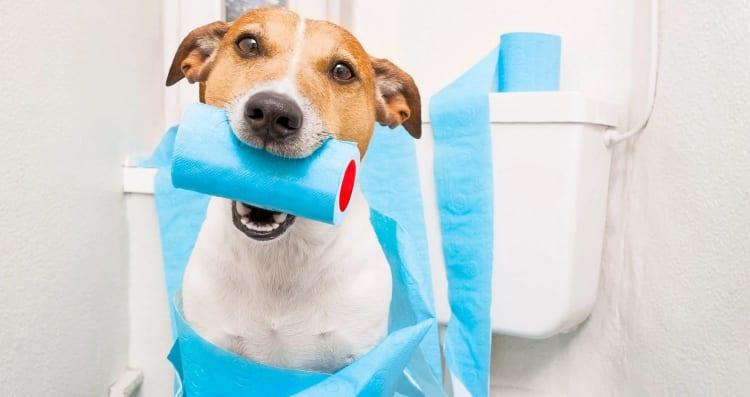 Magetrøbbel hos hund