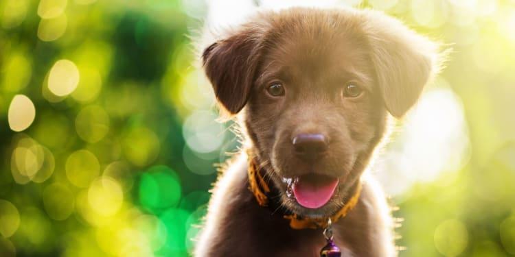Ny hund i huset – hva bør du ha hjemme? Av VESO Apotek.