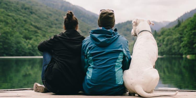 Ferie med hund i sommer? 5 ting du må pakke!   VESO Apotek