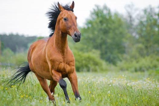 Lyst til å lære mer om hestehelse?