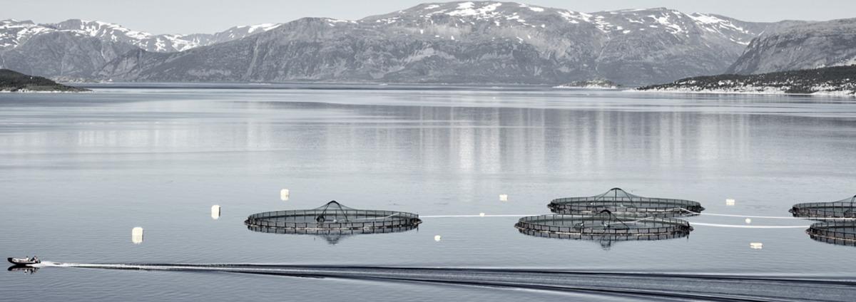 Produkter til akvakultur
