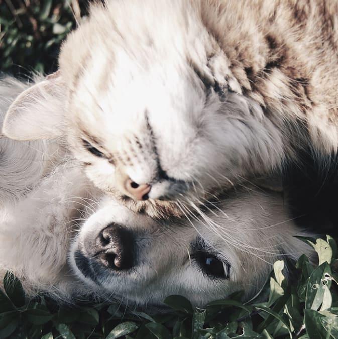 Netthandel for dyreeiere