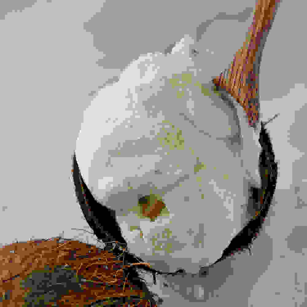 coconut ice cream with whipped coconut cream and coconut flakes in a coconut bowl