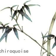 chiroquoise