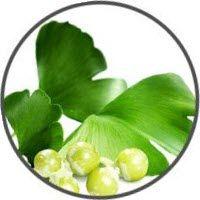 Ginkgo Leaf (GINKGO BILOBA)