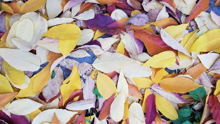 Collecte des feuilles et résidus verts Rosemont–La Petite-Patrie