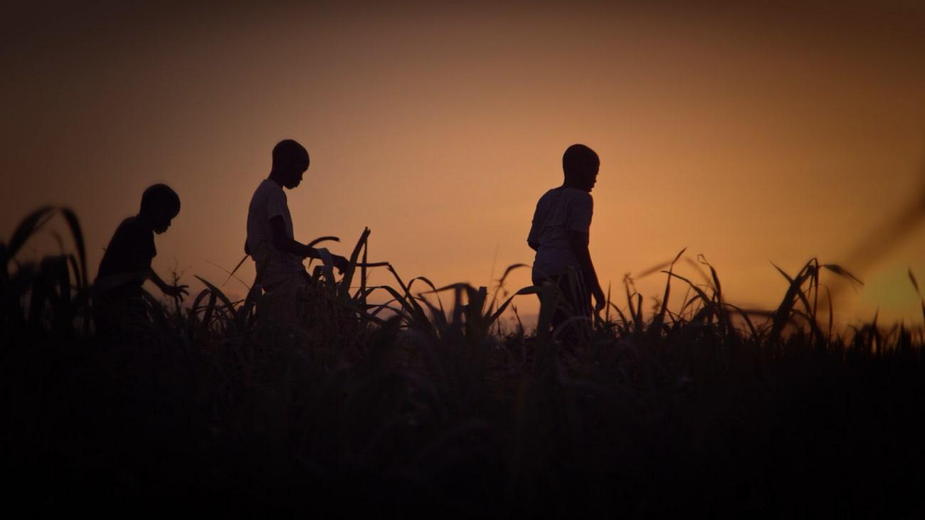 Trois personnes marchent dans les herbes hautes, image du film les Apatrides