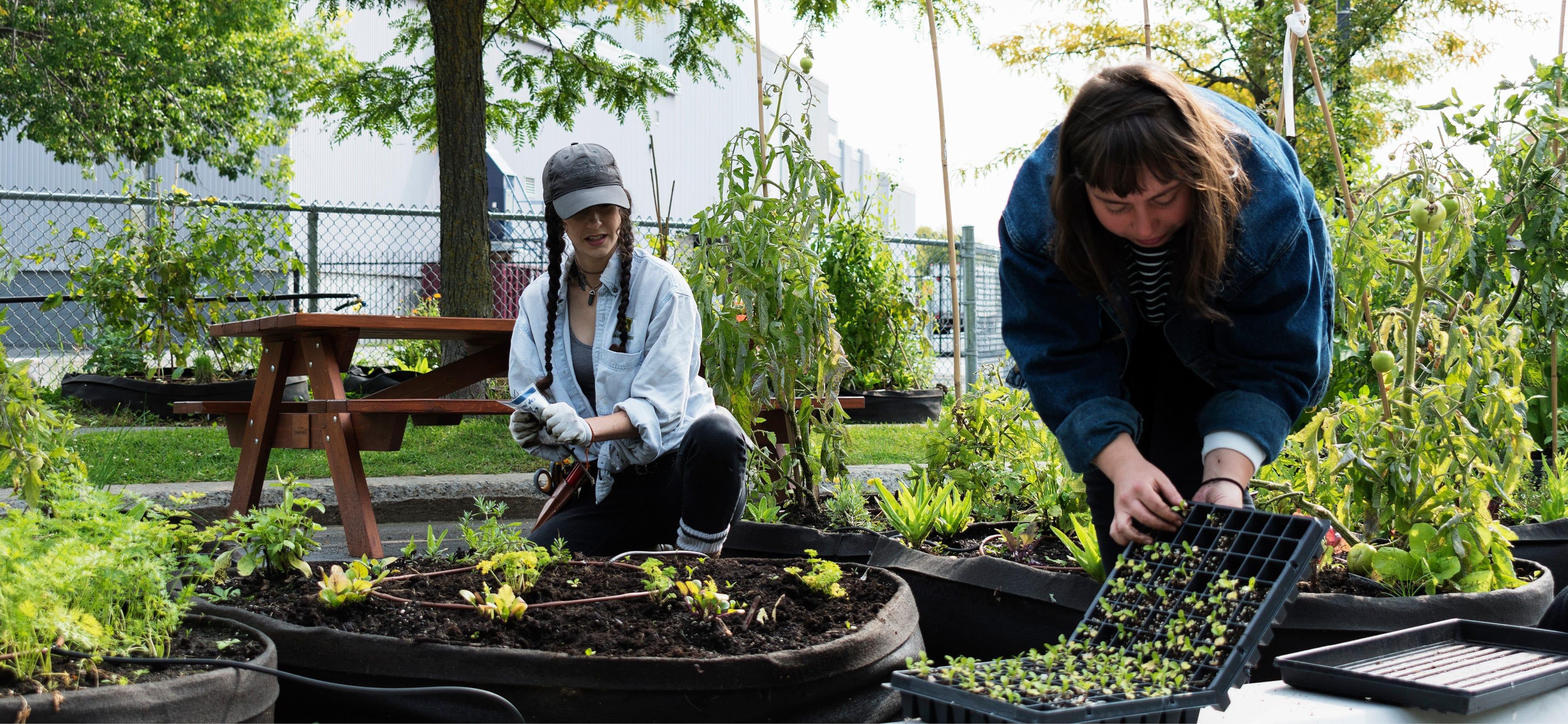 Mylène est animatrice horticole et Émilie est chargée de projets, toutes les deux au Carrefour alimentaire Centre-Sud