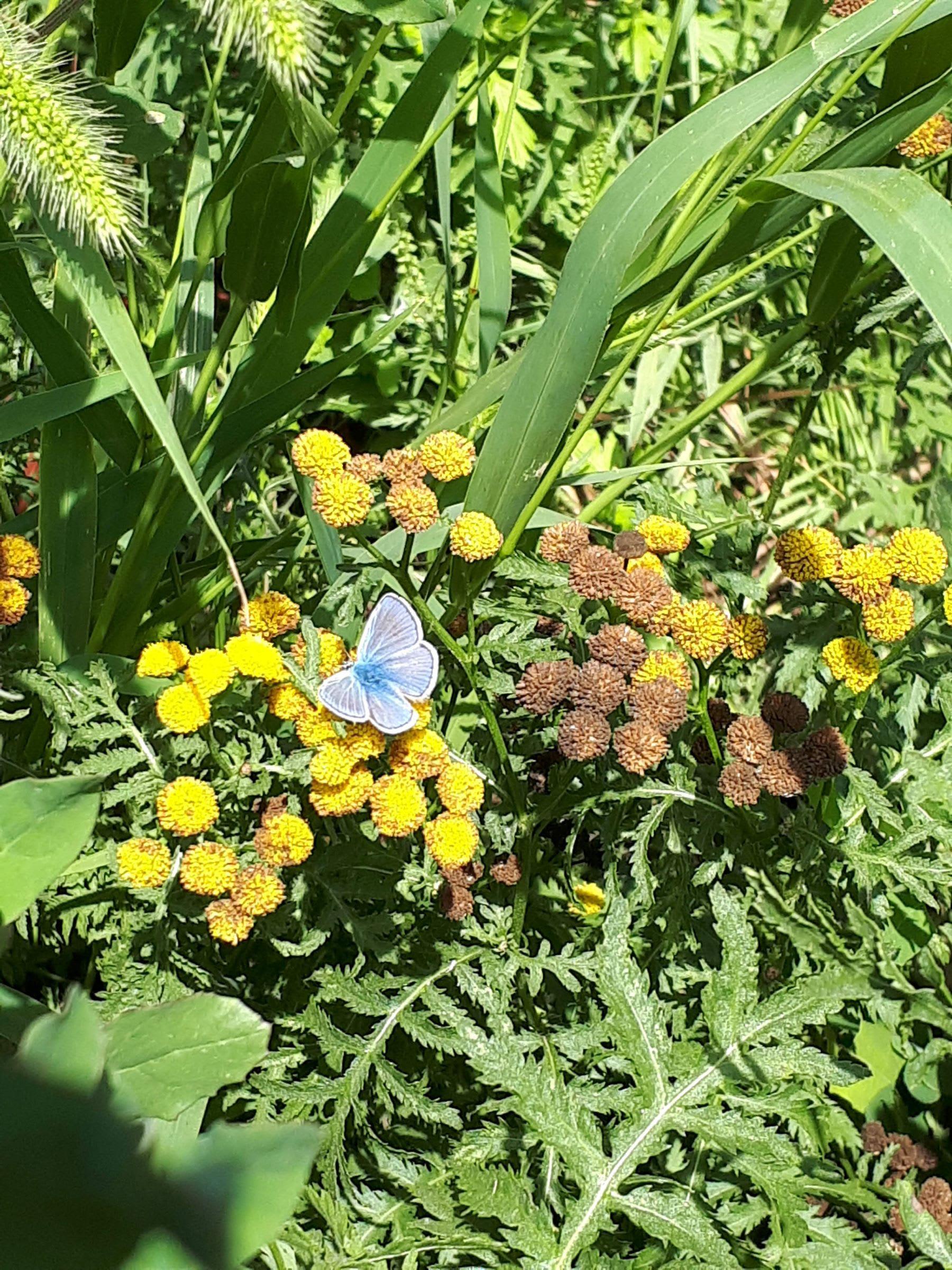 Papillon dans les fleurs