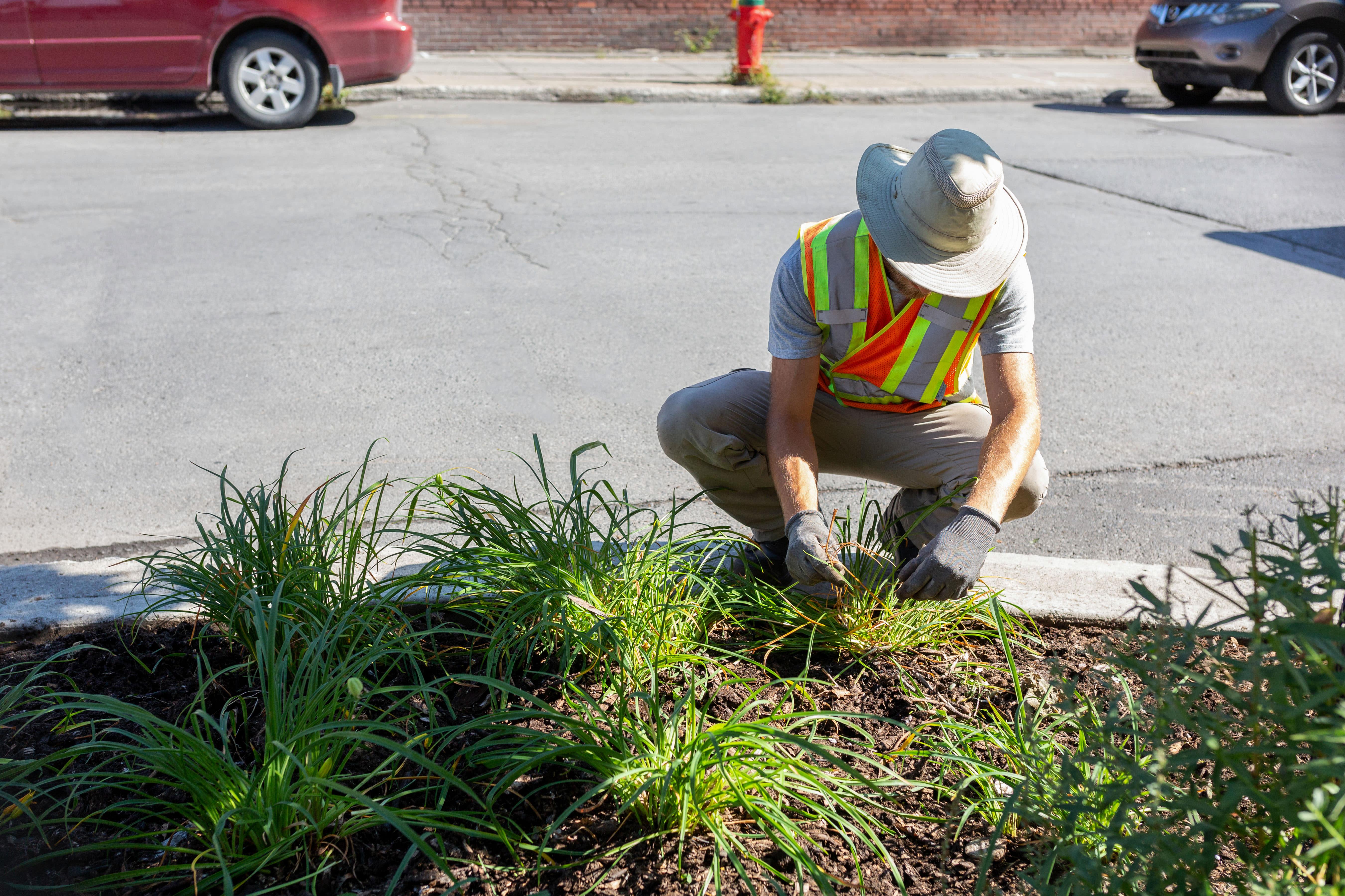 Un horticulteur de MHM prend soin d'une saillie de trottoir sur la rue Ontario