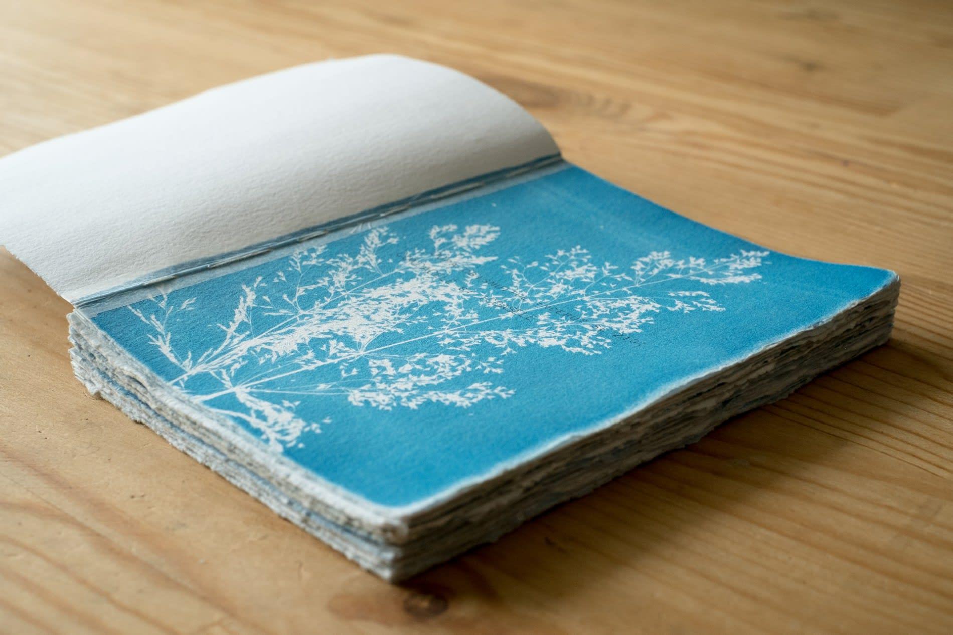 Épreuve de cyanotype sur papier - Maxime Boisvert©