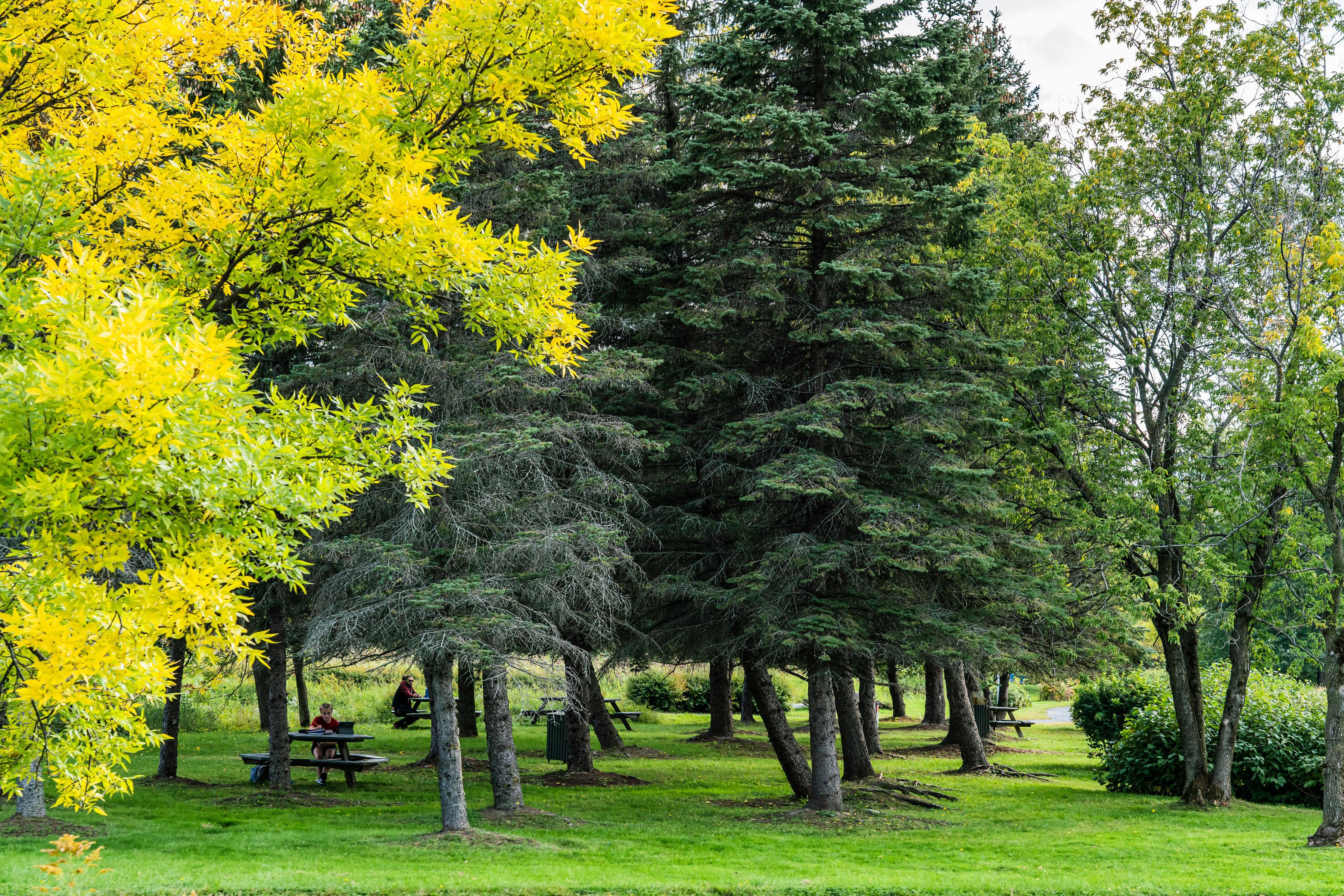 Picnic area near the pines at the Parc-nature de la Pointe-aux-Prairies.