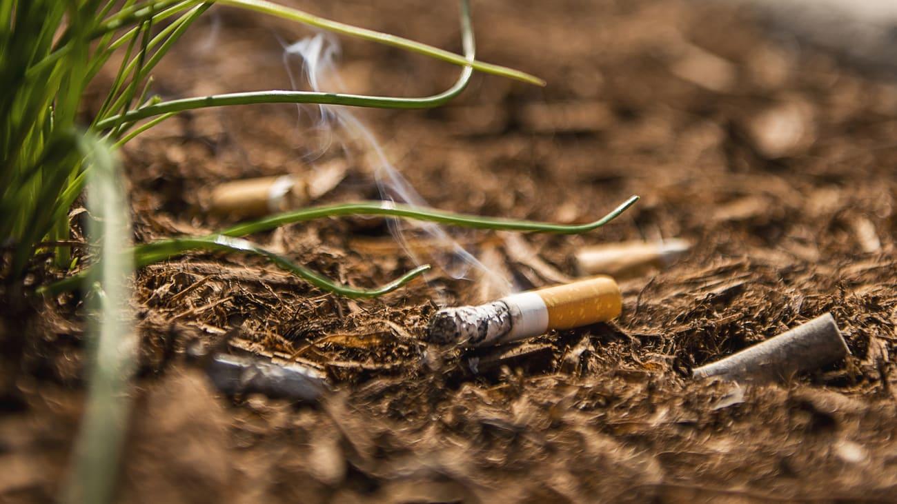 Un mégot de cigarette jeté au sol