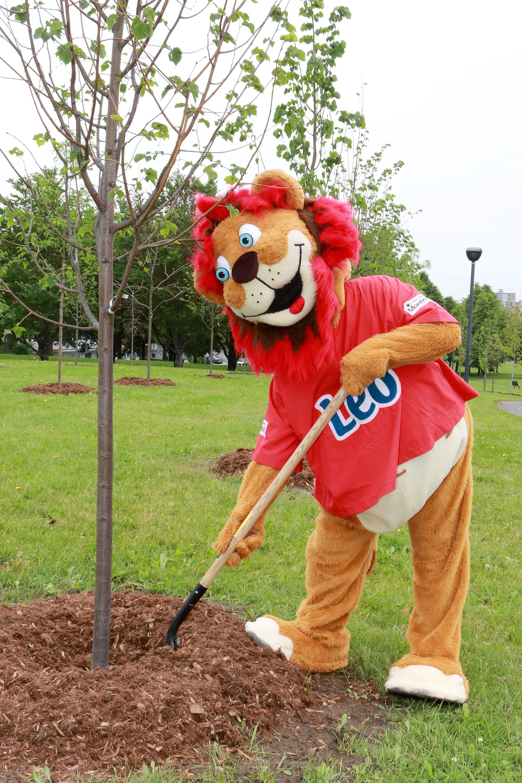 La mascotte Léo plante un arbre