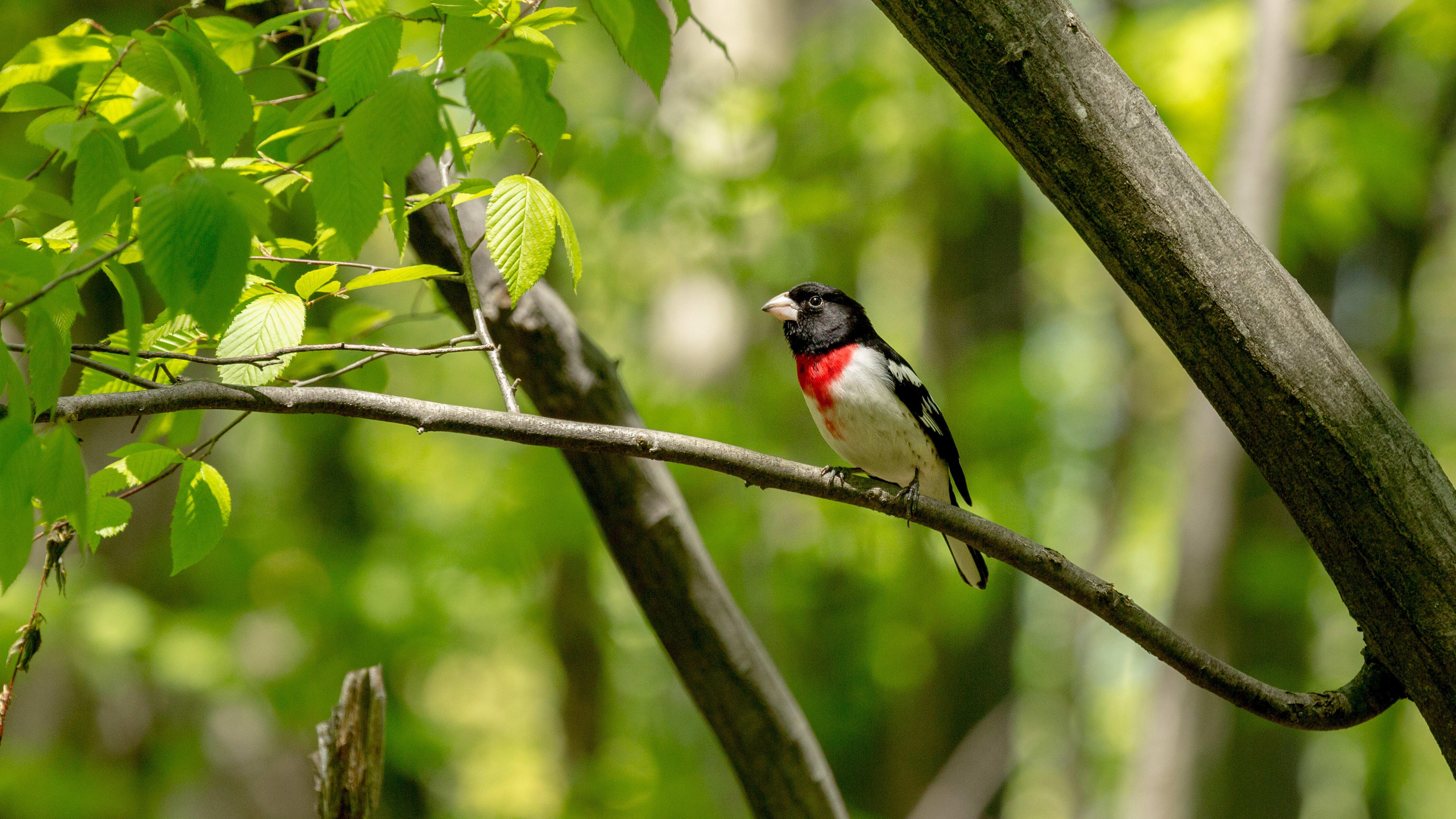 Oiseau dans un arbre