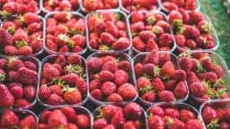 Fruits au marché fermier Laurier.