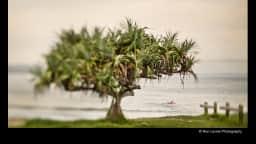 photo présentant un arbre