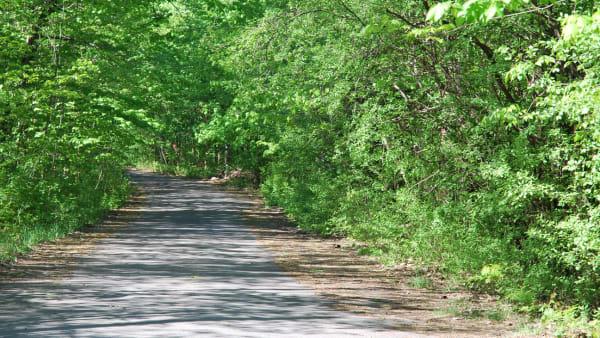 Parc-nature du Bois-de-Saraguay