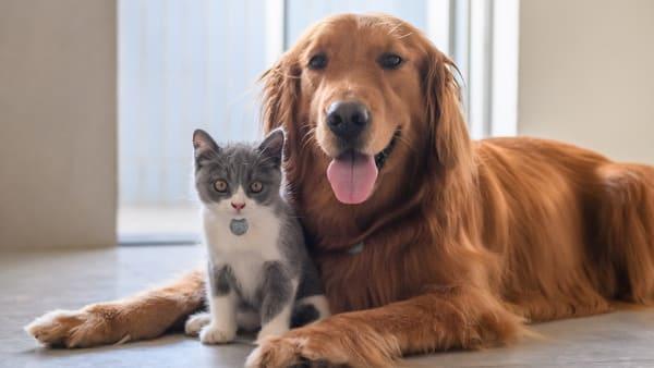 Un chat et un chien avec leur médaille.