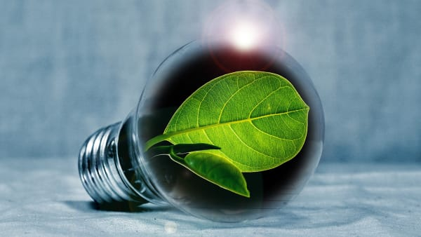 Image d'une ampoule avec une pousse verte à l'intérieur en référence à l'énergie verte