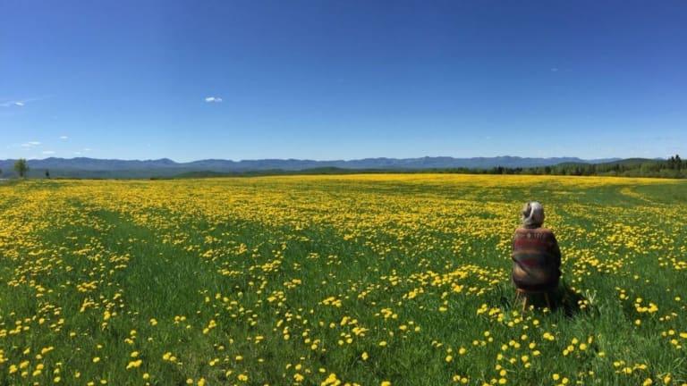 Nous voyons un champ vert avec des fleurs jaunes, et un ciel bleu. Il y a une personne parmi les fleurs.