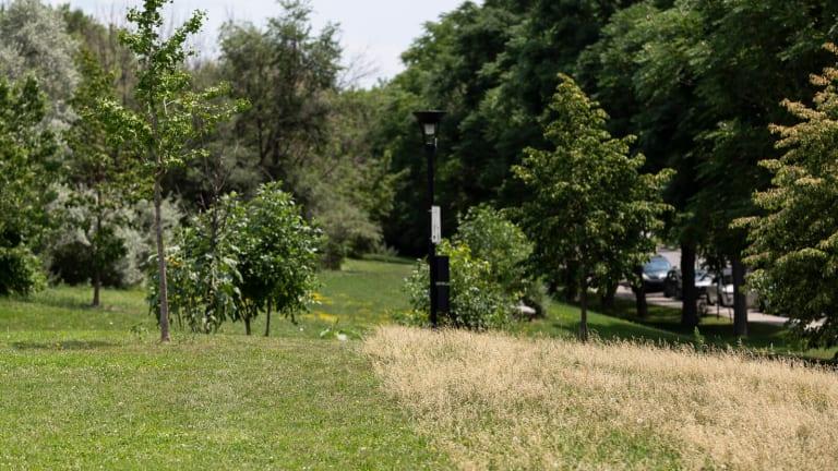 Zone de gestion différenciée au parc Félix-Leclerc