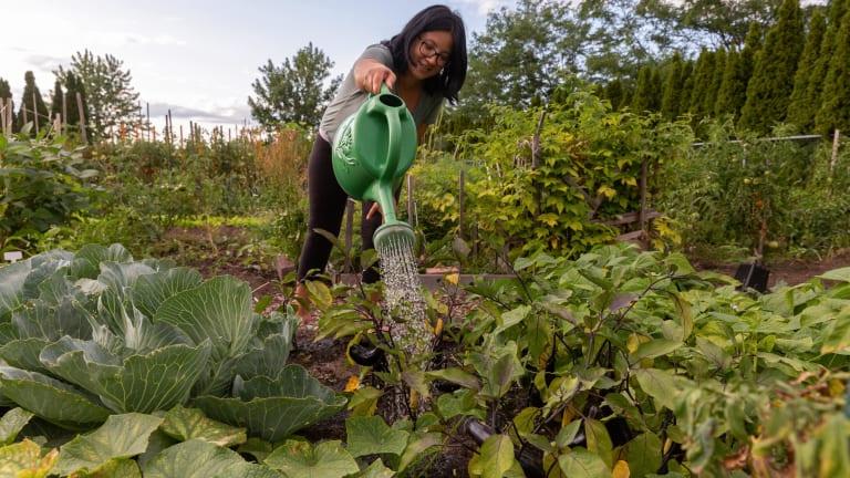 Citoyenne arrosant ses plants de légumes dans un jardin communautaire de Pointe-aux-Trembles