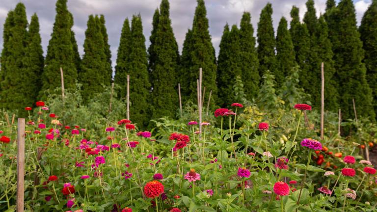 Fleurs rouges et arbustes
