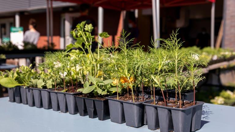 Distribution de végétaux 2020 dans MHM