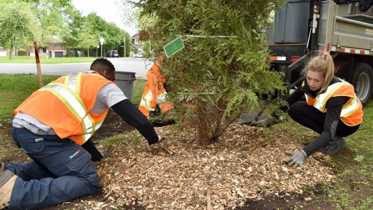 Plantation d'arbres verdir pour embellir