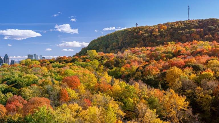 Le mont Royal en automne