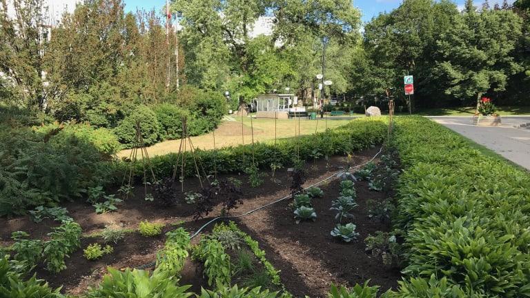Plantations collaboratives dans 3 nouveaux jardins collectifs d'Outremont