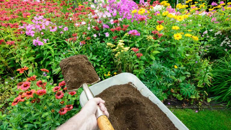 plantes vivaces en fleurs et brouette de terre