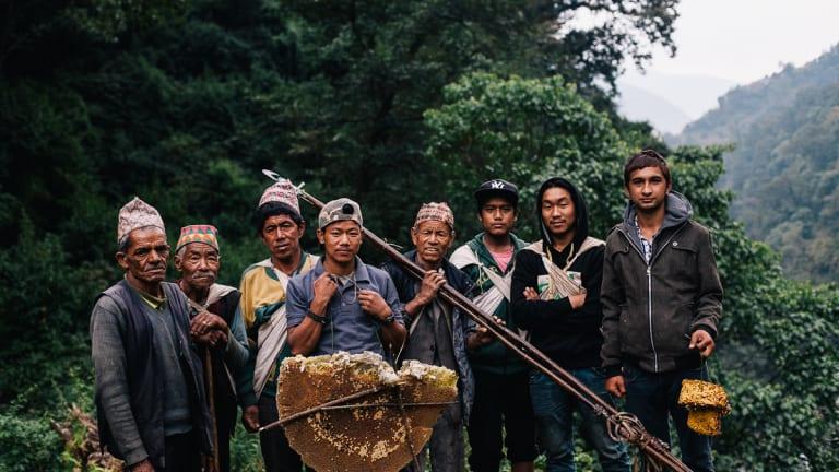 Miel népalais