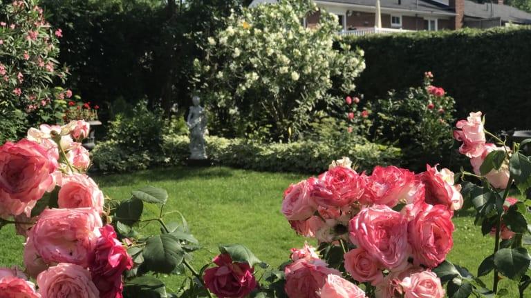 Plus beau jardin de Montréal-Nord 2021