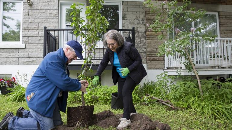 Montréal amorce la plantation de 500 000 arbres